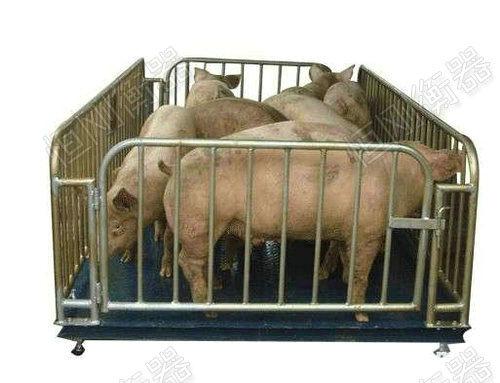 牲畜电子秤