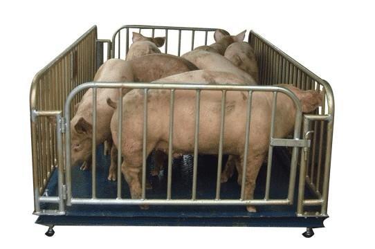 湖南3T带围栏动物